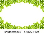 green leaves frame isolated on...