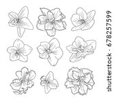 vector set with violets | Shutterstock .eps vector #678257599