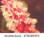 persicaria flowers | Shutterstock . vector #678280591
