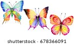 Exotic Butterfly Wild Insect I...