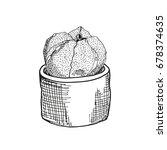 cactus astrophytum asterias in... | Shutterstock .eps vector #678374635