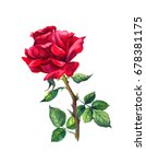 Stock photo red rose one flower isolated on white watercolor 678381175