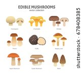 Edible Mushrooms Set. Vector...