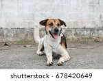 cute dog sitting on the street | Shutterstock . vector #678420649