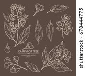 collection of camphor  branch... | Shutterstock .eps vector #678444775