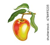 mango. realistic hand drawing...   Shutterstock .eps vector #678495235