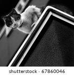 Stock photo cat 67860046