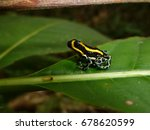 poison dart frog  also known as ...   Shutterstock . vector #678620599