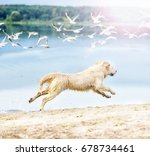 Stock photo a dog runs and jumps on the beach 678734461