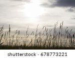 green wheat field and sunny day | Shutterstock . vector #678773221