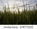 green wheat field and sunny day | Shutterstock . vector #678773335
