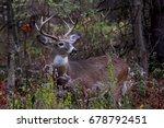white tailed deer buck in rut... | Shutterstock . vector #678792451