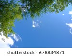 Green Tree Leaves On Blue Sky...