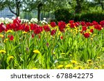 spring landscape with flowers.  ... | Shutterstock . vector #678842275