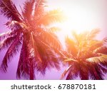 coconut palm tree in vintage... | Shutterstock . vector #678870181