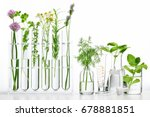 bottle of essential oil with... | Shutterstock . vector #678881851
