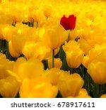 tulip. beautiful field garden...   Shutterstock . vector #678917611
