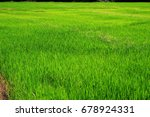 view of the field | Shutterstock . vector #678924331