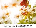 colorful summer garden daisy... | Shutterstock . vector #678925525