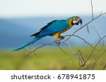 Blue And Gold Macaw Bird On...