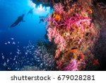 Underwater Coral With Bright...