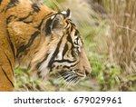 edinburgh   february 11  a...   Shutterstock . vector #679029961