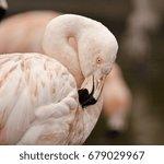 edinburgh   february 11  a... | Shutterstock . vector #679029967