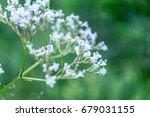 beautiful wild flowers | Shutterstock . vector #679031155