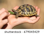 a young tortoise is feeded by a ... | Shutterstock . vector #679045429