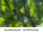 Spider Web On The Window