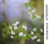 spring flowers. spring flowers | Shutterstock . vector #679052095