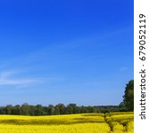 rapeseed flowers canola field... | Shutterstock . vector #679052119