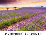 beautiful lavender fields in a... | Shutterstock . vector #679100359