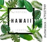 tropical leaves on white... | Shutterstock .eps vector #679107949