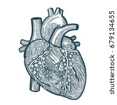 hand drawn human heart... | Shutterstock .eps vector #679134655