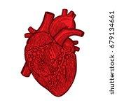 hand drawn human heart... | Shutterstock .eps vector #679134661