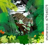 Vector Clouded Leopard In...