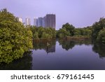 mangrove plants in the northern ... | Shutterstock . vector #679161445