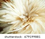 white feathers | Shutterstock . vector #679199881