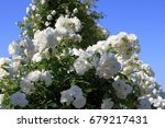 white rose arch  blue sky... | Shutterstock . vector #679217431