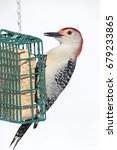 Small photo of Male Red-bellied Woodpecker (Melanerpes carolinus) on a suet feeder on a white background