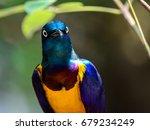 curious looking blue bird with... | Shutterstock . vector #679234249