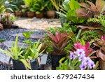 simple pathway in home garden... | Shutterstock . vector #679247434