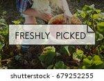 100  nature organic freshly... | Shutterstock . vector #679252255