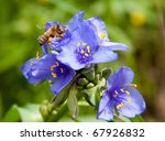 tiny bee collecting nectar in... | Shutterstock . vector #67926832