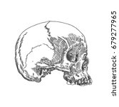 monochrome anatomic drawing of... | Shutterstock . vector #679277965