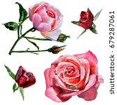 wildflower rose flower in a... | Shutterstock . vector #679287061
