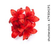 Red Lily Flowers. Isolated On...
