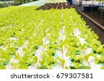 hydroponics vegetable farm. the ... | Shutterstock . vector #679307581
