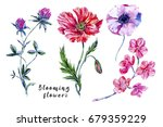 Watercolor Set Of Wildflowers ...